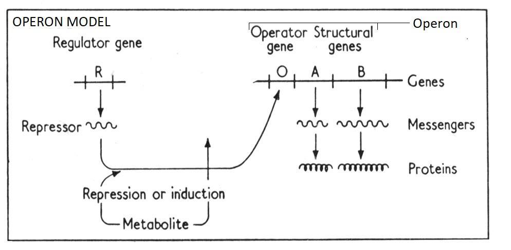 Milestones in the history of mRNA (vaccines) - Part 1